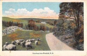 Pittsfield New Hampshire Sheep Pasture Roadway Antique Postcard K93069