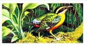 Brooke Bond Trade Card Tropical Birds No 14 Angolan Pitta