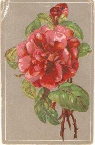 Beautiful red rose Nice old vintage German postcard