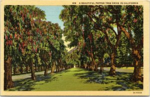 A Beautiful Pepper Tree Drive in California postcard