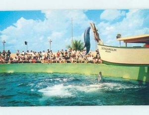 Pre-1980 SEAQUARIUM SCENE Miami Florida FL AF9490