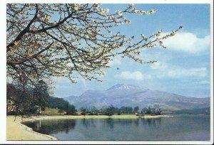 Scotland Postcard - Loch Lomond and Ben Lomond from Luss - Dunbartonshire  AB515