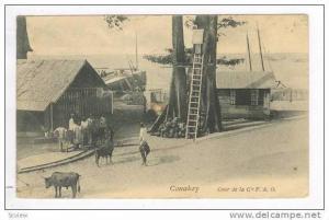 CONAKRY, Guinea, 00-10s  Cour de la Cie F.A.O.