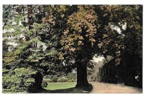 UK Oxford University New College in the Garden Postcard