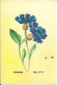 JUDAICA, Centaurea Flower, Blue Boy, Cornflower, Hebrew Script 1940's ?