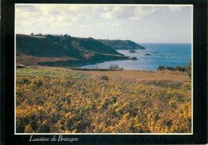 France lumiere de bretagne seaside flowers postcard