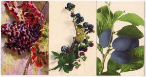 3 - Cards with Fruit, Berries, Grapes, & Plums