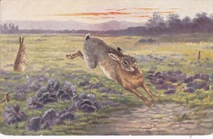 TUCK #6912; The Hare (Scenting Danger), 1900-10s