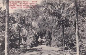 Azores Ponta Delgada Garden Antonio Borges