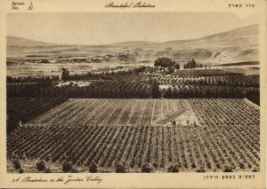 israel palestine, Plantation in the Jordan Valley (1930s) Postcard