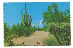 Cactus Saquaro Cholla Prickly Pear Desert Display 1973 4X6