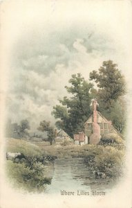 Postcard art rural in the country house where lilies bloom