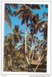 Toddy-Tapper, Penang, 50-60s