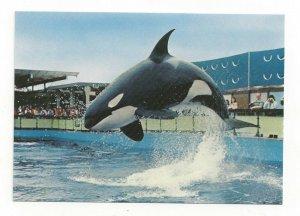 HAIDA Killer Whale, Sealand Of The Pacific, VICTORIA, B. C., Canada, 1950-70s