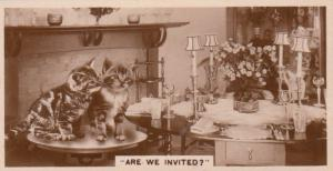 Cat Cats Wanting Dinner Party Invite German Real Photo Cigarette Card