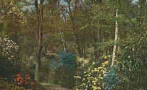 Windsor Rhododendron Flower Garden Great Park 1970s Postcard