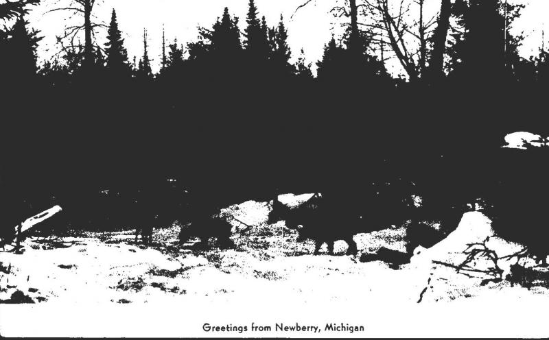 Michigan Greetings From Newberry Deer Herd Real Photo
