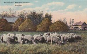 Nebraska Grazing Sheep A Comfortable Western Homestead Curteich
