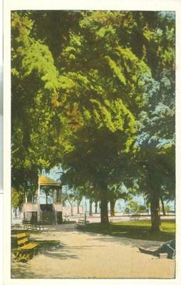 Park & Benches, unused Pacific Novelty early 1900s Postcard