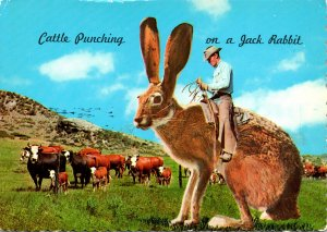 Humour Exageration Cattle Punching On A Jack Rabbit