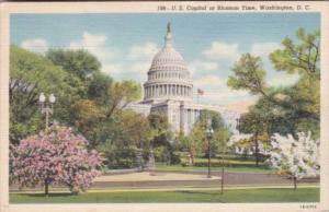 United States Capitol Building At Cherry BLossom Time Washington D C Curteich