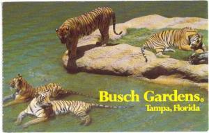 Bengal Tigers at Claw Island Busch Gardens Tampa Florida FL