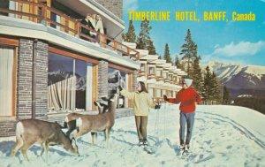 BANFF , Alberta , Canada , 1963 ; Timberline Hotel, Deer, Women on Ski's