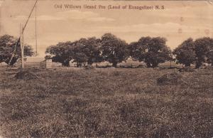 Old Willows Grand Pre (Land Of Evangeline), NOVA SCOTIA, Canada, PU-1908