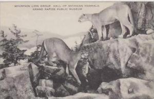 Michigan Grand Rapids Lion Group Hall Of Michigan Mammals Grand Rapids Public...