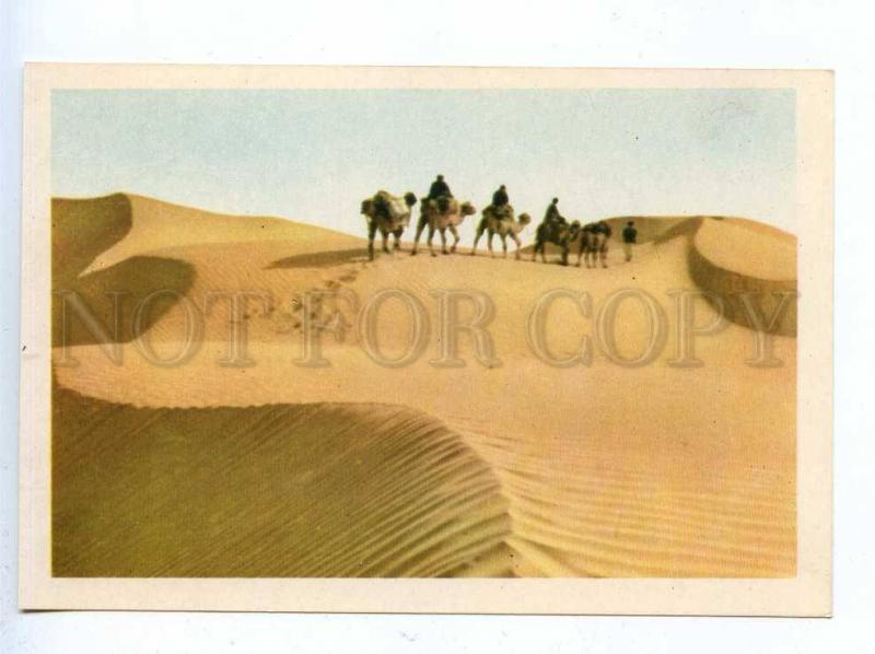 199592 CHINA Xinjiang ships of the desert camels postcard