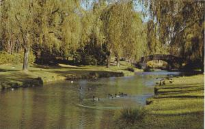 Stream & Bridge, Tranquility, Standy Park,  Vancouver,  B.C., Canada,  40-60s