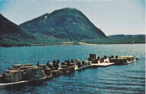 A Lobster Pound, Along The Bays and Inlets Of Newfoundland, Canada, 1940-1960s