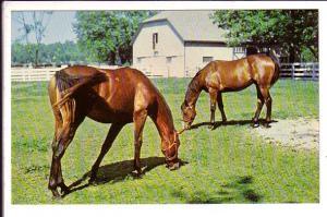 Kentucky Horse Park, Grazing Horses and Barn