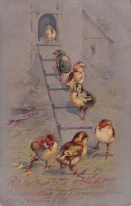 Seven chicks outside their coop, PU-1905