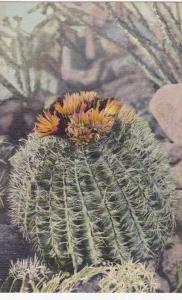 Barrel Cactus - Southwest US Desert Flower - Linen