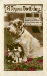 Embossed RPPC 3325/1 Birthday Terrier Dog Guarding two Black & White Kittens