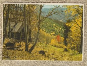 AUTUMN IN THE ROCKIES Scenic Postcard Fall Foliage
