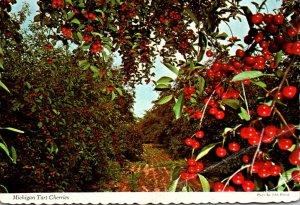 Michigan Tart Cherries 1978