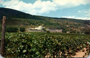 New York Lake Canandaigua Widmer's Vineyards 1959