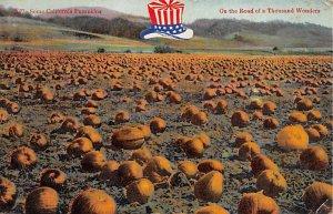 Pumpkins Road of a ThoUSA nd Wonders Fruit Assorted 1916