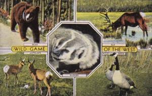 Wild Game Of The West Bear Elk Antelope and Wild Geese