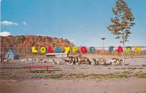 Farm Animals - Lollipop Farm - Humane Society - Rochester, New York