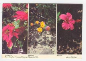 Tropical Flowers of Cayman Islands,B.W.I.  Poinsettia, Lantana, Hibiscus, 60-70s