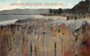 California Moss LINDA VISTA PARK Santa Monica Palisades Park c1910s Postcard