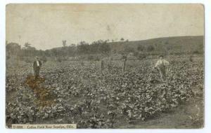 D/B of Cotton Fields near Sapula Oklahoma OK
