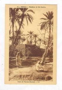 BISKRA - Marabout de Sidi-Brahim, Oasis de Palmiers-Dattiers, 1910s