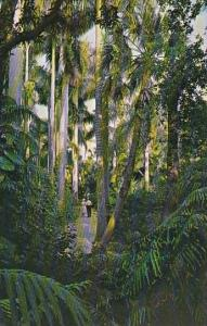Florida Jungle Trail And Royal Palms