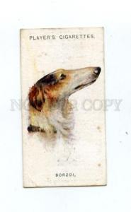 166934 BLORZOI by WARDLE Player CIGARETTE card ADVERTISING