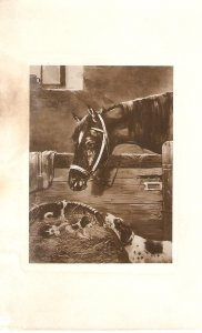 Horse and dogs Old vintage antique French postcard
