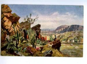 173199 South Africa Transvaal Colony Vintage TUCK postcard